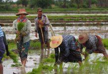 provinsi penghasil beras