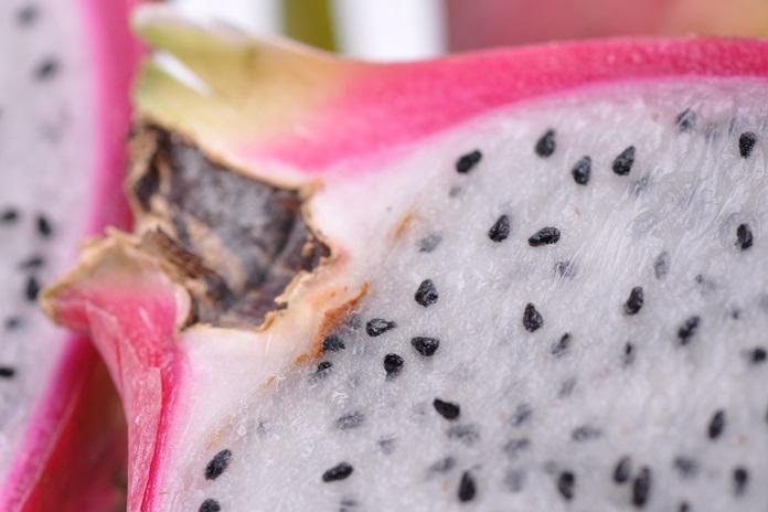 menanam biji buah naga