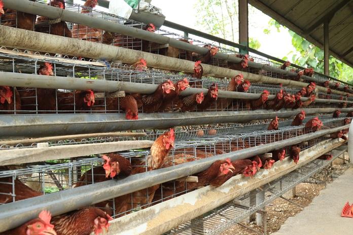 skala usaha peternakan