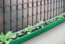 menanam sayur di pekarangan