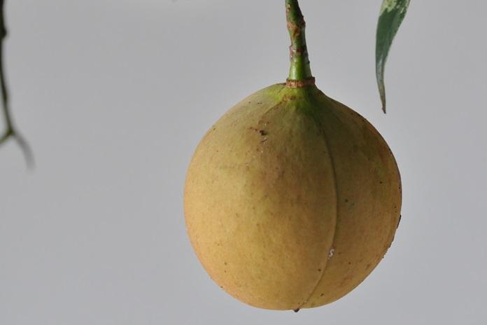 herbal pala