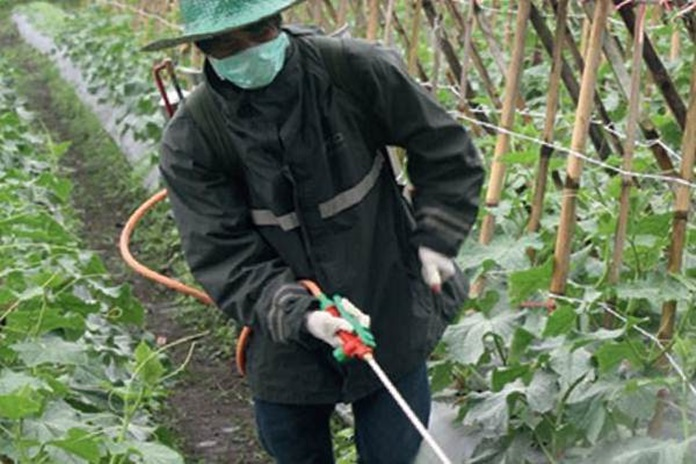 memberikan pestisida