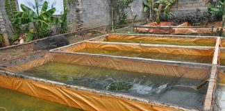produktibvitas kolam