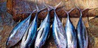 ikan segar konsumsi