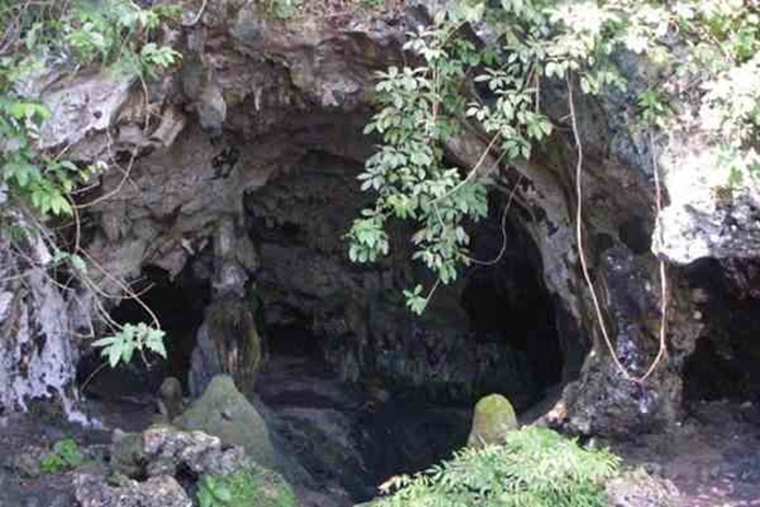 sarang walet di gua