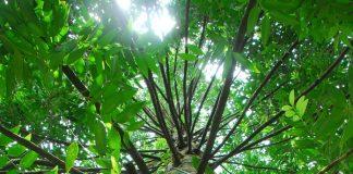 tanaman perkebunan