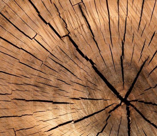 mengawetkan kayu