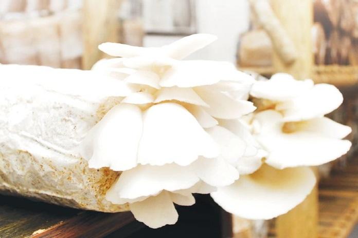 jenis jamur