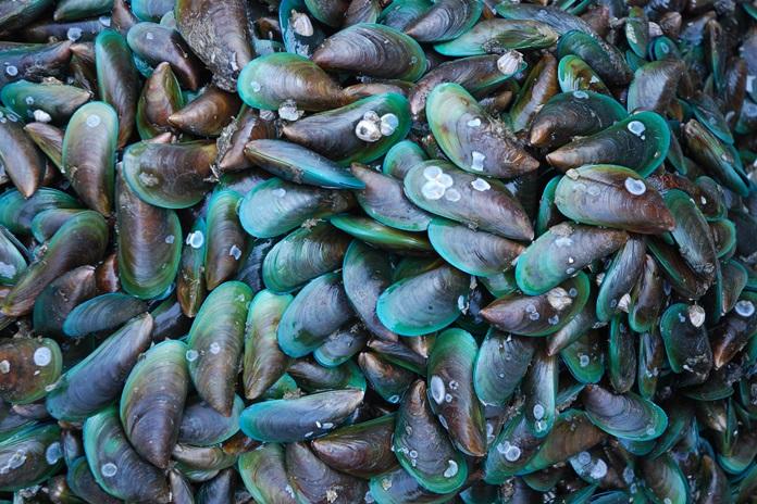komoditas laut