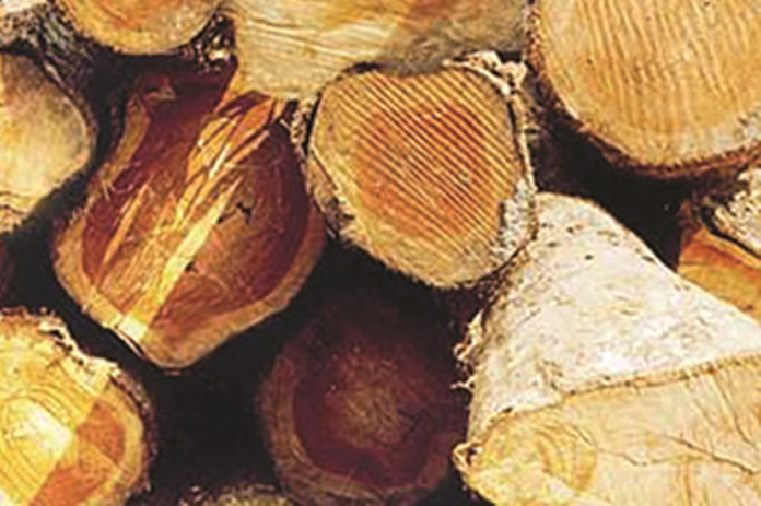 kayu jati