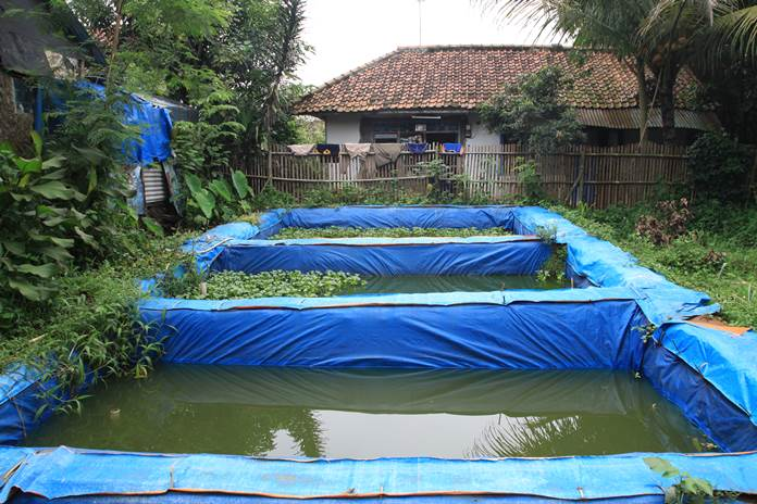 jenis kolam budidaya lele