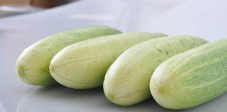 sayuran cucurbitaceae