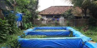 kolam terpal