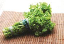 sayuran compositae