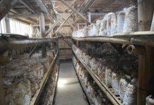 sterilisasi rumah kumbung