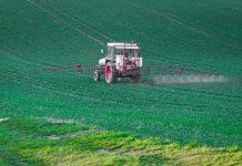 pestisida kimia