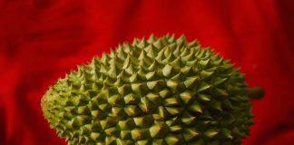 durian favorit