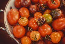 pascapanen tomat