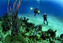 restorasi terumbu karang