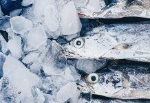 daging ikan cakalang