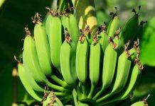 kampung pisang