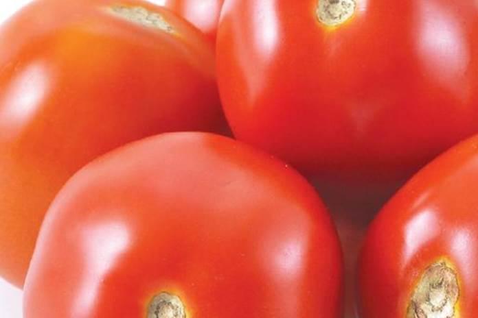 varietas tomat unggul