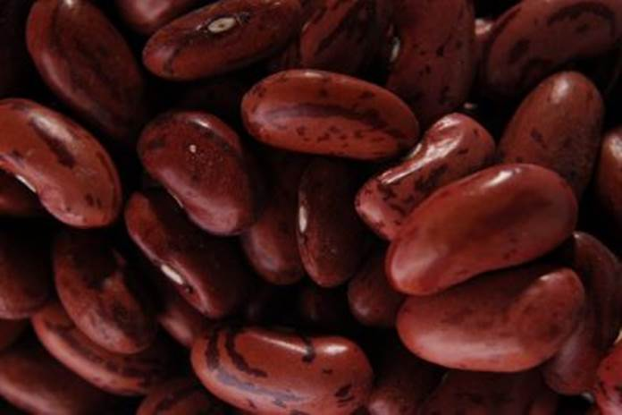 nutrisi kacang merah