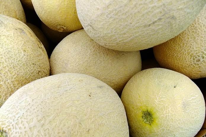 melon hibrida indorif