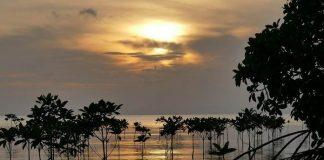 manfaat mangrove