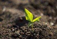 tingkat kesuburan tanah