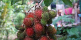 pemasaran buah rambutan