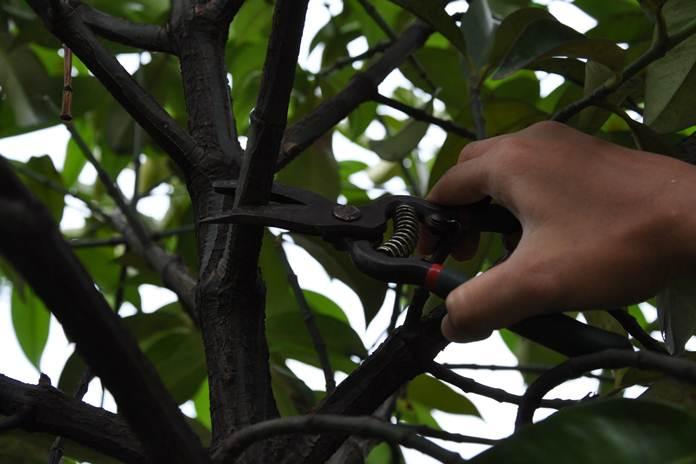 cabang pohon