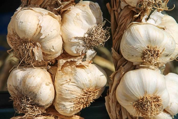 pestisida bawang putih