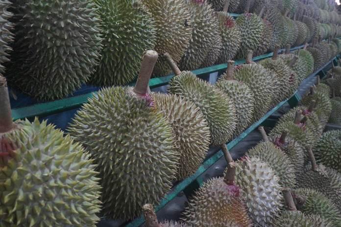 jenis durian unggul