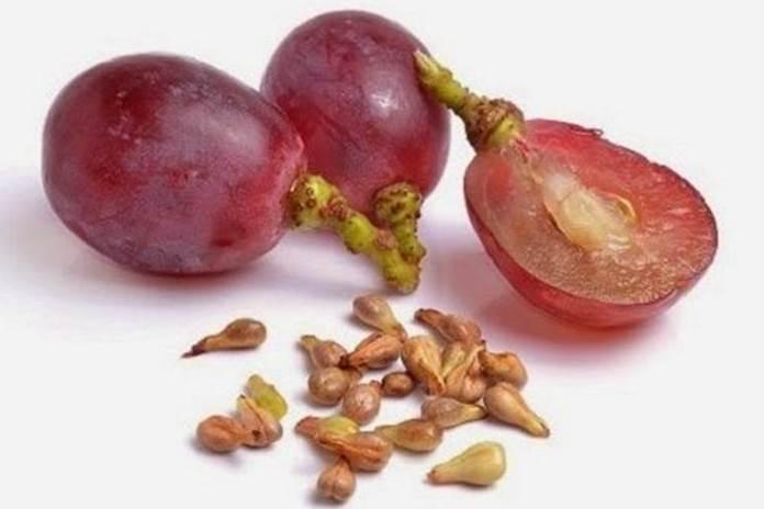 manfaat biji anggur