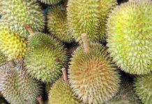 bisnis kebun durian