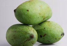 panen buah mangga