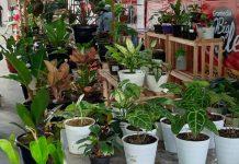 pameran tanaman hias