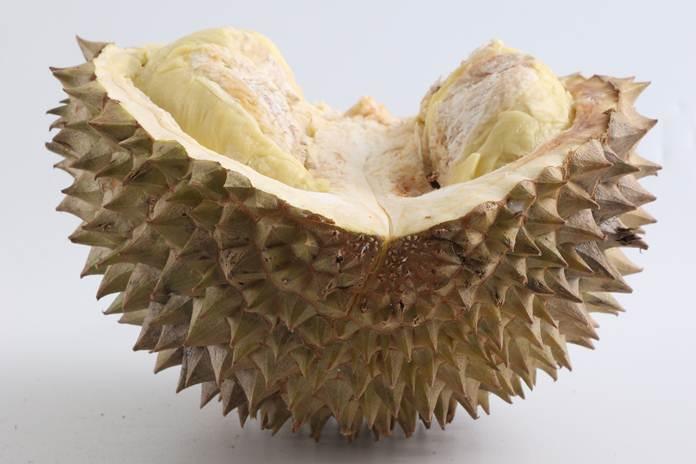 durian berdaging tebal