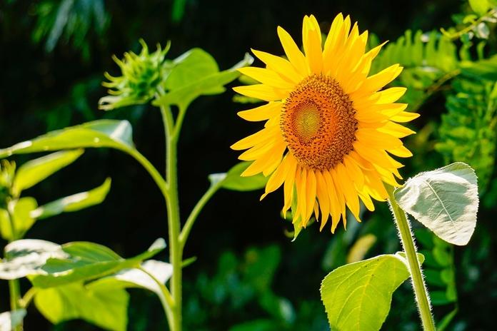 tanaman refugia