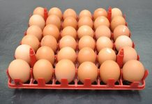 produksi telur
