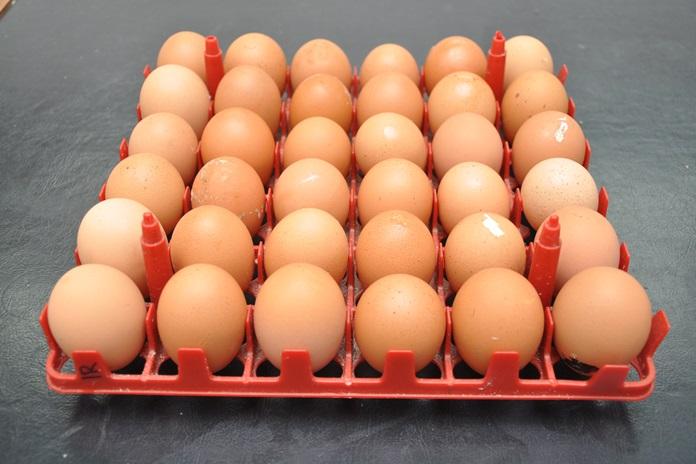 Kiat Sukses Menjaga Tingkat Produksi Telur Hingga Akhir Periode