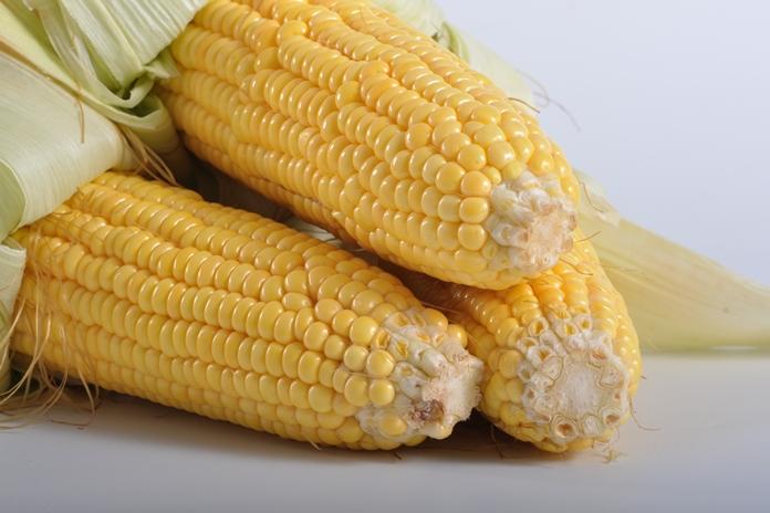 manfaat jagung manis