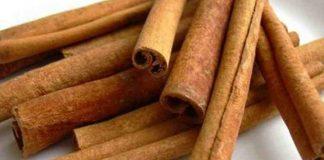 eksportir kayu manis