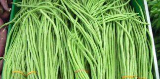 tanaman leguminosae