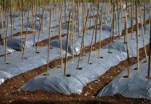 Smart Soil Sensing Kit