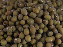 varietas unggul kacang hijau
