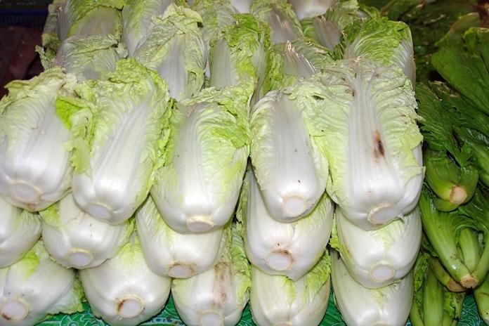 menanam sawi putih