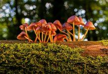 mengenali jamur beracun