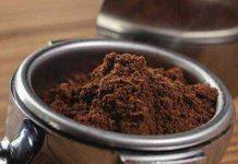 jenis kopi luwak